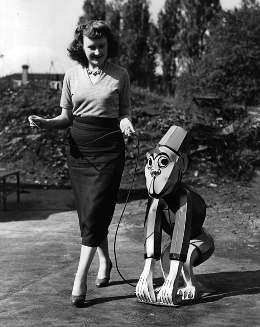 1952: Barbara Mitchell of Kingsbury walks with a model of a chimpanzee made in the factory where she works