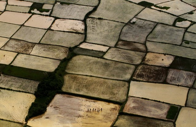 This aerial view shows Indian farmers replanting paddy saplings at a rice field after monsoon rains on the outskirts of Bhubaneswar, India, Wednesday, Aug. 6, 2014. The annual monsoon season, which runs from June through September, is vital for the largely agrarian economies of South Asia. (Photo by Biswaranjan Rout/AP Photo)