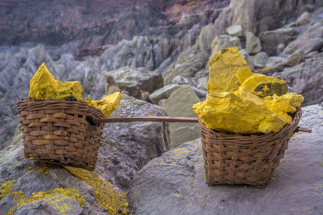 After cracking the hardened sulfur, the miners put them into bamboo baskets. 70-80 kilo is the average for one go. Some miners might carry up to 120 kilo. Cracked collarbones aren't unusual. When the sun rises they start carrying it up to the craters rim where they parked a trolley. With the trolley they roll up to 3 loads of sulfur down to the checkpoint. The checkpoint is 3 km away. (Photo by Claudio Sieber/Barcroft Images)