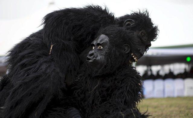 "A gorilla mascot performs during the annual mountain gorilla naming ceremony, also known as ""Kwita Izina"", in Kinigi town, Rwanda, September 5, 2015. (Photo by Edward Echwalu/Reuters)"
