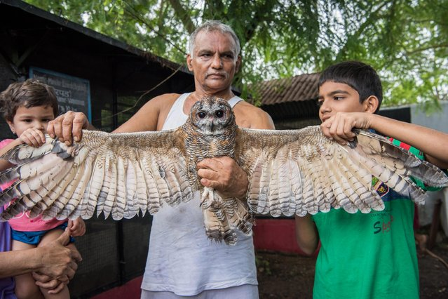 Prakash Amte and his grandson and granddaughter are seen holding a Mottled Wood Owl on September 19, 2017 in Maharashtra, India. (Photo by Haziq Qadri/Barcroft Media)