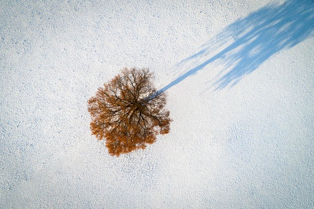 A tree surrounded by snow is seen near Chavannes-les-Forts, western Switzerland, on December 3, 2017. (Photo by Fabrice Coffrini/AFP Photo)