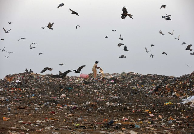 Birds fly over as a rag picker collects recyclable material at a garbage dump in New Delhi November 19, 2014. (Photo by Ahmad Masood/Reuters)