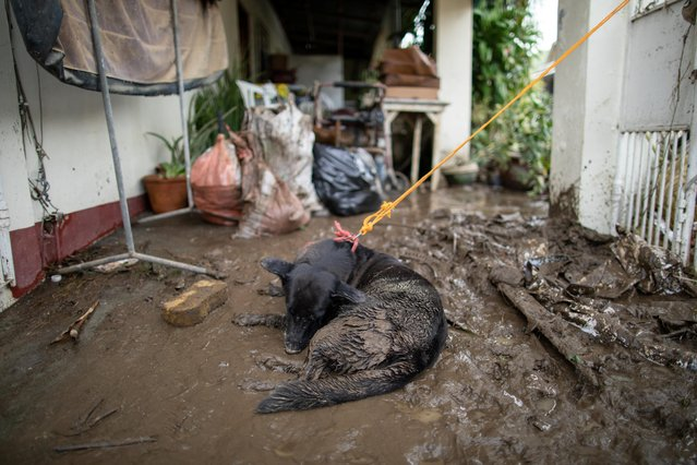 A dog covered in mud rests outside a house affected by floods caused by Typhoon Goni, in Tierra Verde subdivision, Batangas City, Philippines, November 2, 2020. (Photo by Eloisa Lopez/Reuters)
