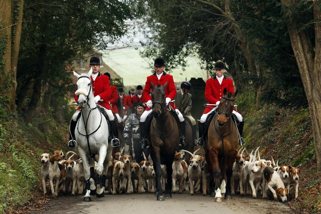 Members of the Old Surrey Burstow and West Kent Hunt ride to Chiddingstone Castle for the annual Boxing Day hunt in Chiddingstone, south east England December 26, 2014. Since a ban stopped fox hunting with hounds, hunts continued with dogs chasing down a pre-laid scented trail instead of a fox. (Photo by Luke MacGregor/Reuters)
