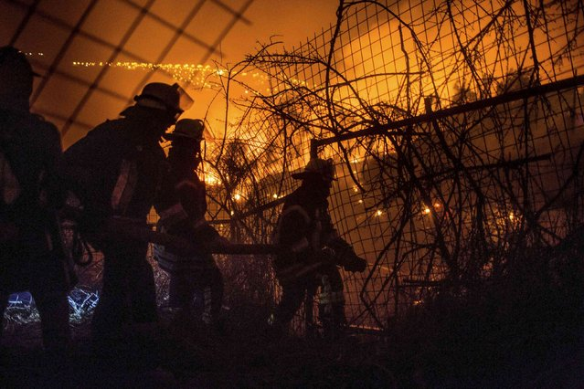 Firefighters work to put out a forest fire in the hills of the port city of Valparaiso, March 14, 2015. (Photo by Pablo Sanhueza/Reuters)