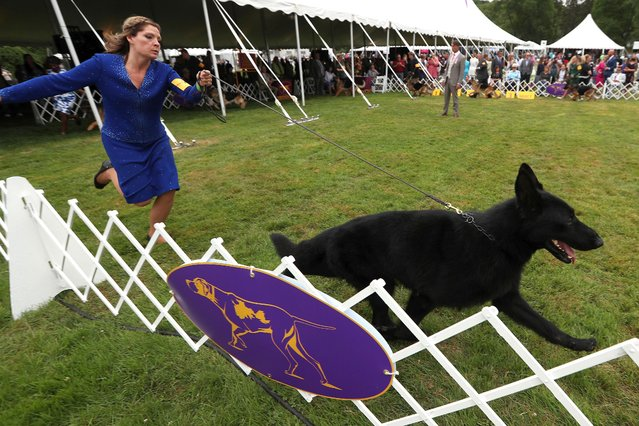 A handler runs along with a German Shepherd dog during breed judging at the 145th Westminster Kennel Club Dog Show at Lyndhurst Mansion in Tarrytown, New York, U.S., June 12, 2021. (Photo by Mike Segar/Reuters)