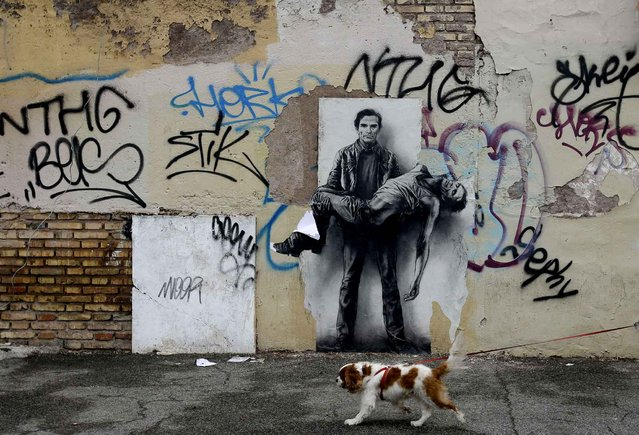 A dog on a leash strolls past a poster of famed Italian director and writer Pier Paolo Pasolini depicted as carrying his own dead body in Rome, Saturday, May 23, 2015. The beaten dead body of Pasolini was found on a beach of Ostia, in the outskirts of Rome, Nov. 2, 1975. (Photo by Gregorio Borgia/AP Photo)