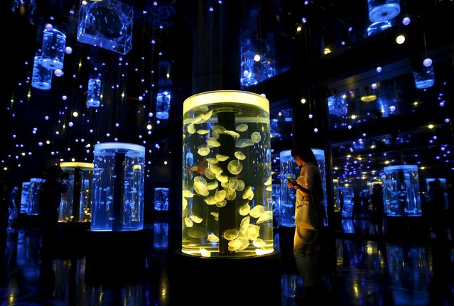A woman looks at jellyfish during a media preview for the Epson Aqua Park Shinagawa aquarium's re-opening in Tokyo, July 6, 2015. (Photo by Toru Hanai/Reuters)