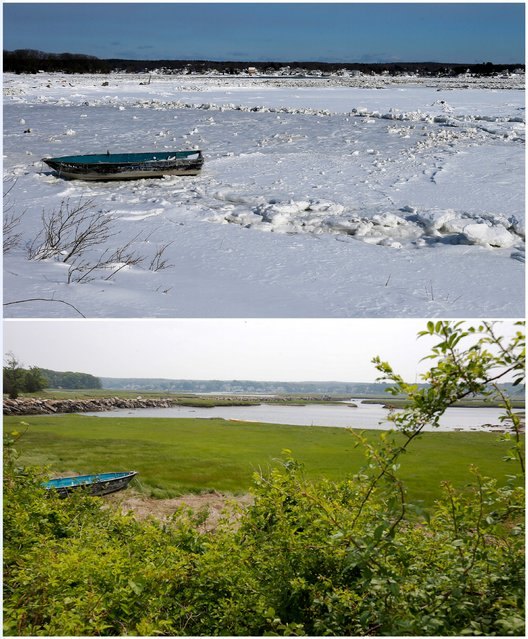 A combination picture shows a boat sitting on a salt marsh covered with snow and ice near Wingaersheek Beach in Gloucester, Massachusetts, United States February 20, 2015 (top), and the same boat near the Beach June 11, 2015. (Photo by Brian Snyder/Reuters)