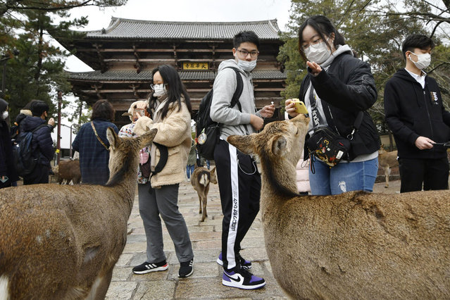 Chinese tourists wearing face masks visit famed Nara Park in Nara, western Japan, Wednesday, January 29, 2020. Japan's health officials on Tuesday said that it has confirmed what could be the first human-to-human infection in the country. The first suspected person-to-person infection involves a male patient in his 60s from Nara, who has not traveled to Wuhan. The man, however, is a tour bus driver who served two groups of Chinese tourists from Wuhan from Jan. 8-16. (Photo by Nobuki Ito/Kyodo News via AP Photo)