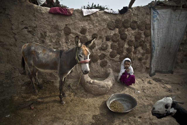 An Afghan refugee girl sits in front of her family's home on the outskirts of Islamabad, Pakistan, Tuesday, November 5, 2013. (Photo by Muhammed Muheisen/AP Photo)