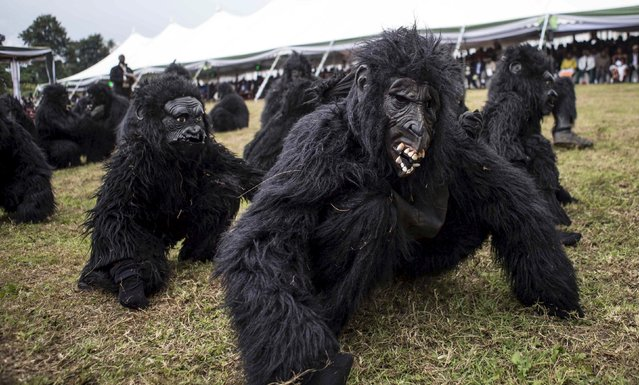 """People dressed as gorillas perform during the annual mountain gorilla naming ceremony, also known as """"Kwita Izina"""", in Kinigi town, Rwanda, September 5, 2015. (Photo by Edward Echwalu/Reuters)"""