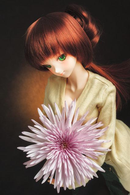 Dolls. One week, One flower No.25 -Mum-. (Suzuhico)