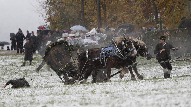 A man falls of a horse-drawn carriage that crashes after the horses bolted during the traditional Leonhardi pilgrimage in Bad Toelz, southern Germany, Thursday, November 6, 2014. Several people were injured in the annual pilgrimage honoring St. Leonhard, patron saint of the highland farmers for horses and livestock. (Photo by Matthias Schrader/AP Photo)