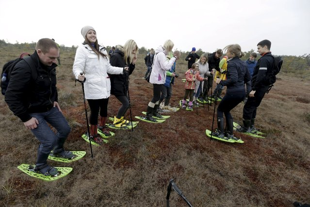 People enjoy jumping on the spongy ground during a tour of the Great Kemeri Bog, Latvia, October 17, 2015. (Photo by Ints Kalnins/Reuters)