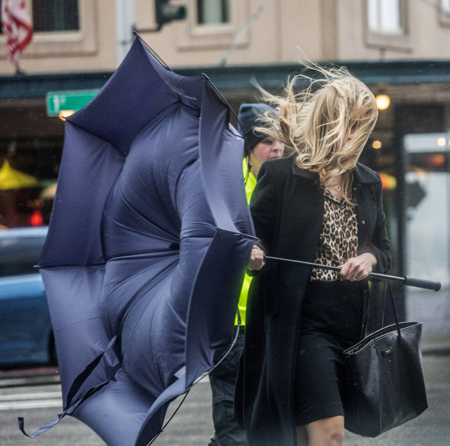 Pedestrians get battered crossing Pine Street on 1st Ave. in downtown Seattle by gusting winds coming off the water Friday, October 14, 2016. (Photo by Steve Ringman/The Seattle Times via AP Photo)