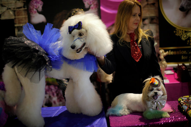 "A woman shows dogs as she takes part in a fashion exhibition during the fifth edition of the ""Mi Mascota"" (My Pet) fair in Malaga, southern Spain, November 27, 2016. (Photo by Jon Nazca/Reuters)"