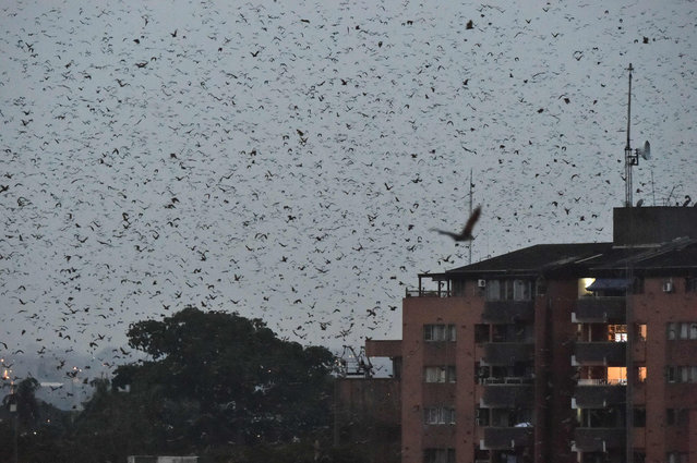 A general view of bats flying over the building in the Abidjan CBD, Ivory Coast, on January 6, 2021. Scientists say that bats are a crucial part of the food chain, but are also a suspected source of viruses, including COVID-19, that have leapt the species barriers to humans. Hunting and human encroachment on their habitat has heightened the risk of transmission. (Photo by Sia Kambou/AFP Photo)