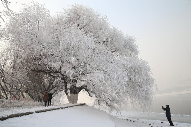 A man captures rime at a park beside a river in Shenyang, Liaoning province, China December 15, 2016. (Photo by Sheng Li/Reuters)