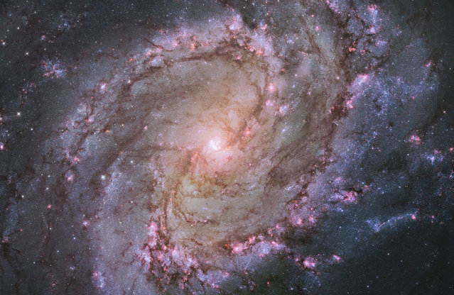 """The barred spiral galaxy M83, also known as the Southern Pinwheel. The Hubble photograph captures thousands of star clusters, hundreds of thousands of individual stars, and """"ghosts"""" of dead stars called supernova remnants. (Photo by Reuters/NASA)"""