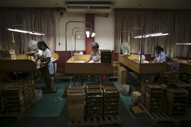 Women work at the quality control room at the Corona Tobacco factory in Havana, March 3, 2016. (Photo by Alexandre Meneghini/Reuters)