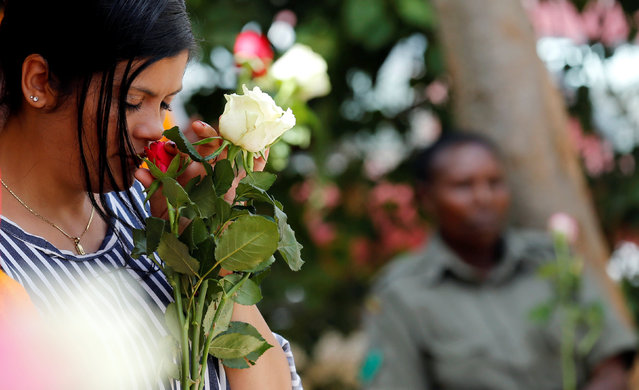 """A female inmate smells a rose flower intended for Valentine's Day, during a celebration dubbed """"love behind bars"""" inside the Langata Women Maximum Security Prison in Kenya's capital Nairobi, February 14, 2017. (Photo by Thomas Mukoya/Reuters)"""