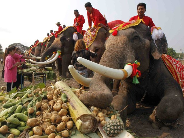 "Elephants enjoy a ""buffet"" of fruit and vegetables during National Elephant Day in the ancient Thai capital Ayutthaya. Thais honoured the elephants with special fruits and Buddhist ceremonies across the country to pay homage to their national animal. (Photo by Chaiwat Subprasom/Reuters)"