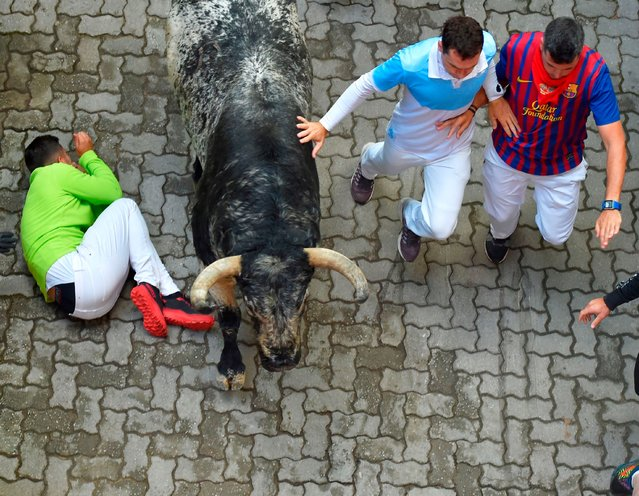 Participants run next to Cebada Gago fighting bulls on the second bullrun of the San Fermin festival in Pamplona, northern Spain on July 8, 2019. On each day of the festival six bulls are released at 8:00 a.m. (0600 GMT) to run from their corral through the narrow, cobbled streets of the old town over an 850-meter (yard) course. Ahead of them are the runners, who try to stay close to the bulls without falling over or being gored. (Photo by Ander Gillenea/AFP Photo)