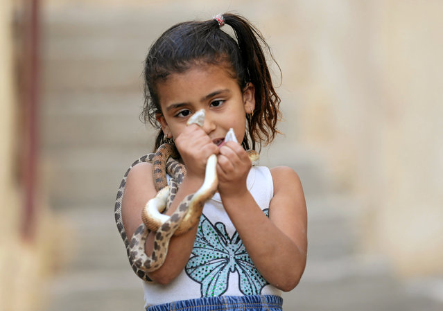 Egyptian zookeeper Salah Tolba's daughter holds a snake which he keeps in a zoo beside his home, in Giza, Egypt, April 28, 2016. (Photo by Mohamed Abd El Ghany/Reuters)