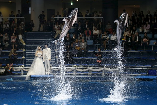 Dolphins jump out of the water in front of models dressed as a bridal couple at a media preview for the Epson Aqua Park Shinagawa aquarium's re-opening in Tokyo, July 6, 2015. (Photo by Toru Hanai/Reuters)