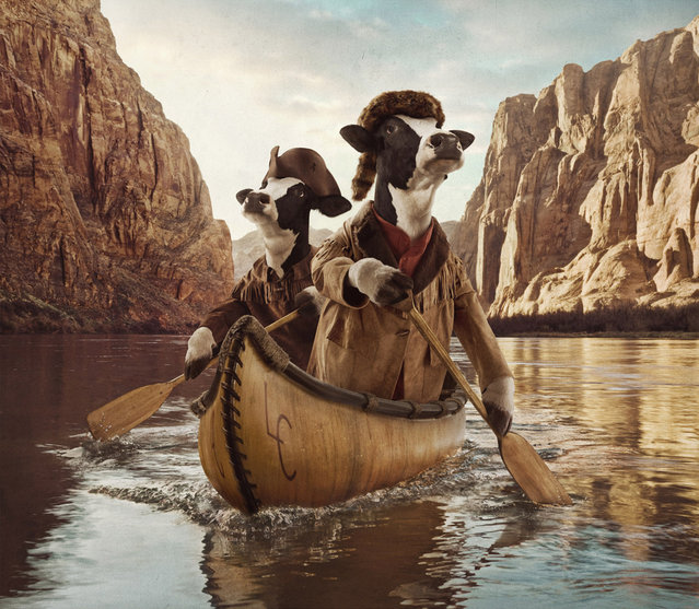 Smalldog Imageworks Creative Retouching for Chick-fil-A Cows Calendar «Trail Grazers» by photographer Andy Mahr