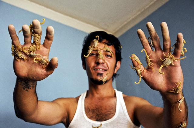 Dr Amin Shirzad poses for photographs with his scorpions considered as his pets at his home in Mazar-e-Sharif, Afghanistan, 03 July 2014. Shirzad raises more than 400 scorpions at his place. After extracting the venom, he uses it in medicine for diseases such as vitiligo and epilepsy. (Photo by Sayed Mustafa/EPA)