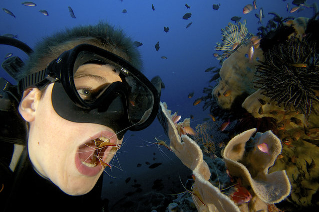 These unique photos capture the moment a boy has his teeth picked clean by amazing underwater shrimp. These fascinating creatures spend their lives diving inside the mouths of fish to remove the parasites that lurk there. Russell Laman imitated the behaviour of the surrounding fish swarm to entice the cleaner shrimp into his mouth whilst snorkelling with his father Tim Laman in Bali, Indonesia. The 13-year-old queued with the waiting fish and then opened his mouth when the shrimps came near. (Photo by Tim Laman/Caters News)