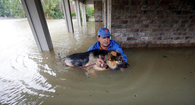 Joe Garcia carries his dog Heidi from his flooded home as he is rescued from rising floodwaters from Tropical Storm Harvey on Monday, August 28, 2017, in Spring, Texas. (Photo by David J. Phillip/AP Photo)