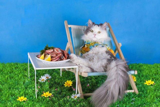 This is the life. (Photo by Svetlana Valyiskaya/Mercury)