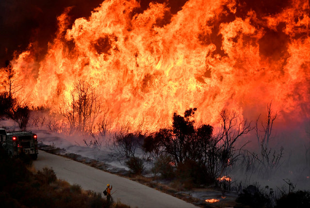 Fire fighters attack the Thomas Fire's north flank with backfires as they continue to fight a massive wildfire north of Los Angeles, near Ojai , California, U.S., December 9, 2017. (Photo by Gene Blevins/Reuters)