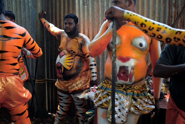 """Indian performers wearing body-paint depicting tigers wait for the artwork to dry as they prepare to take part in the """"Pulikali"""", or Tiger Dance, in Thrissur on September 17, 2016. (Photo by Arun Sankar/AFP Photo)"""