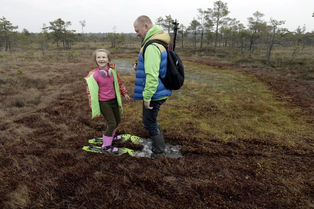 People use snowshoes during a tour of the Great Kemeri Bog, Latvia, October 17, 2015. (Photo by Ints Kalnins/Reuters)