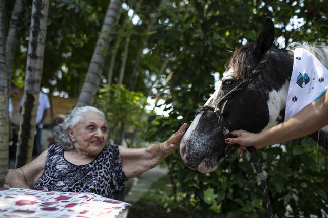 """An elderly woman reaches out to pet a horse named Tony at the """"Casa de Repouso Laços de Ouro"""" nursing home in Sepetiba, Brazil, Thursday, October 1, 2020. The Golias organization brought the animals, who they rescued from abandonment, to provide a little relief from the isolation many elderly people feel, cut off from friends and family due to fear of contagion from the new coronavirus. (Photo by Bruna Prado/AP Photo)"""