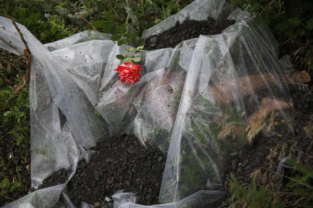 A rose lies on a plastic sheet covering a victim of the Malaysian Airlines Boeing 777 plane which was downed on Thursday near the village of Rozsypne, in the Donetsk region, in this July 18, 2014 file photo. (Photo by Maxim Zmeyev/Reuters)