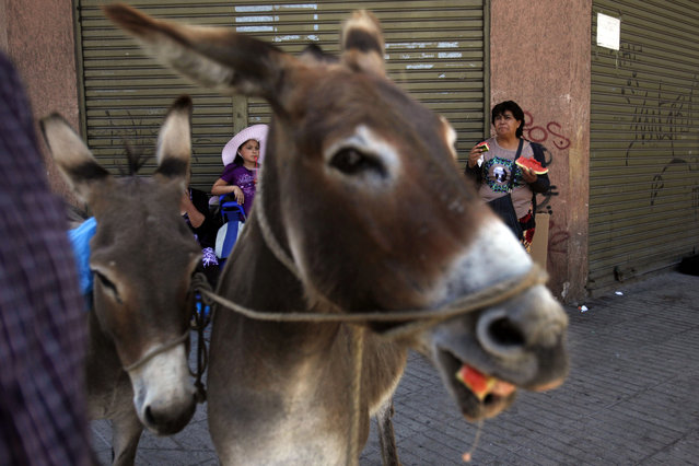In this December 13, 2014 photo, people stop for a snack where brothers Marco and Ricardo Alegria sell their donkeys' milk on the sidewalk in Santiago, Chile. The Alegrias sell shot-sized cups of the milk for about $2. A half-liter, the most they say a donkey produces in a day, goes for about $20. (Photo by Luis Hidalgo/AP Photo)