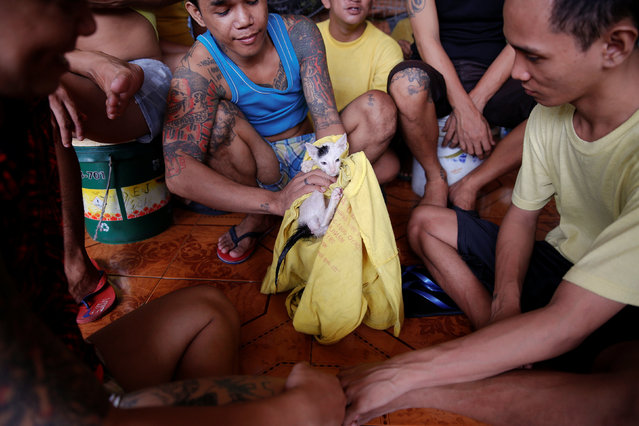 Inmates play with a cat at Quezon City Jail in Manila, Philippines October 19, 2016. (Photo by Damir Sagolj/Reuters)