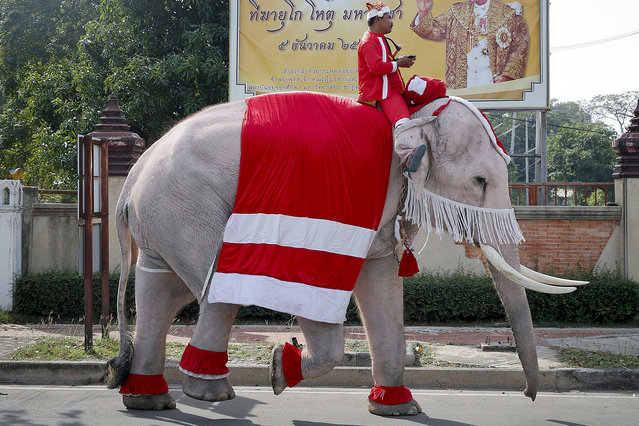 A Thai mahout and his elephant, both dressed as Santa Claus pass in font of a large photograph of Thai King Bhumibol Adulyadej following a Christmas event at a school in the world heritage city of Ayutthaya, north of Bangkok, Thailand, 24 December 2015. The annual event is held to celebrate the Christmas season in the overwhelmingly Buddhist kingdom. (Photo by Diego Azubel/EPA)