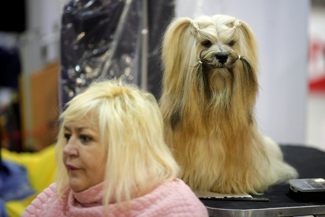 "A woman sits next to a dog during the fifth edition of the ""Mi Mascota"" (My Pet) fair in Malaga, southern Spain, November 27, 2016. (Photo by Jon Nazca/Reuters)"