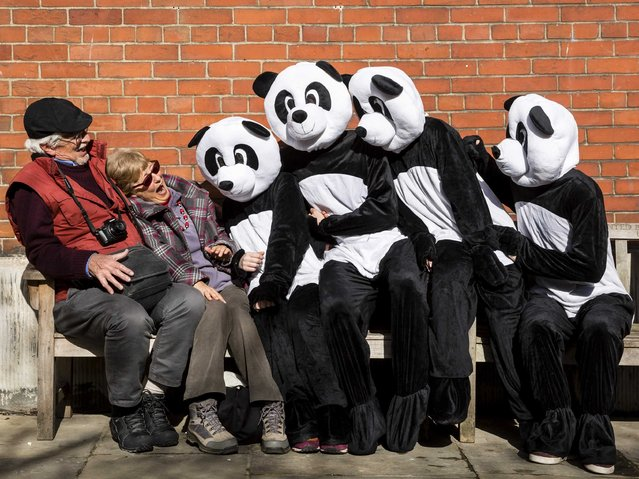 WWF Pandas are seen in London to celebrate the organisation's Earth Hour event which will be held between 20:30 and 21:30 on Saturday 28 March on March 26, 2015 in London, England. (Photo by Miles Willis/Getty Images for WWF/Earth Hour)