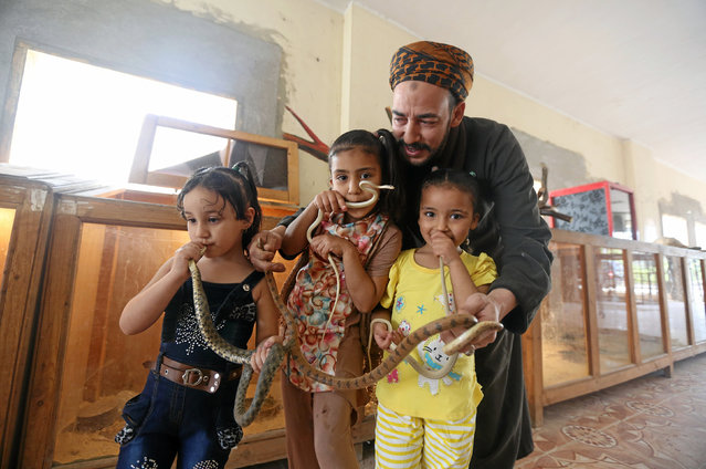 Egyptian zookeeper Salah Tolba's children hold snakes which he keeps in a zoo beside his home, in Giza, Egypt, April 28, 2016. (Photo by Mohamed Abd El Ghany/Reuters)