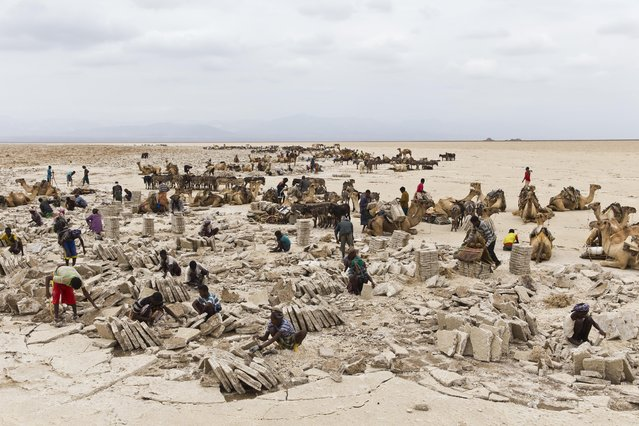 February 8, 2014 – Danakil Desert, Ethiopia: Workers mining salt at the quarry. (Photo by Ziv Koren/Polaris)