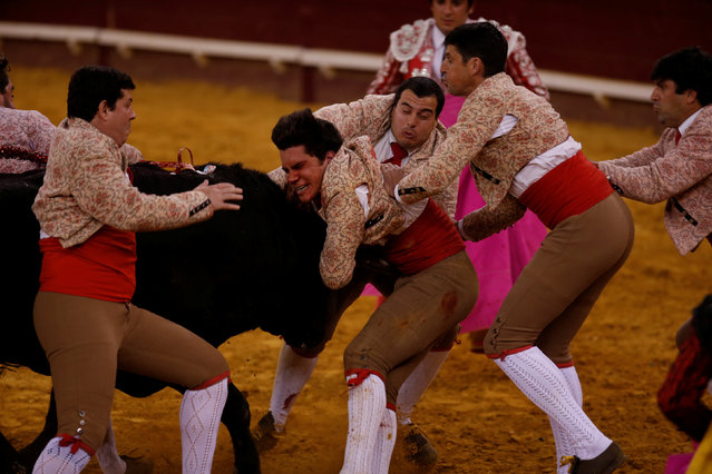 Members of the Coruche forcados group perform during a bullfight at Campo Pequeno bullring in Lisbon, Portugal June 2, 2016. (Photo by Rafael Marchante/Reuters)