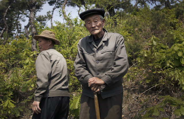 In this May 8, 2015, photo, village elder Song Hong Ik, 77, right, poses for a portrait on Ryongyon-ri hill in Kujang county, North Korea. Song was 13-years old when the Korean War began. (Photo by Wong Maye-E/AP Photo)